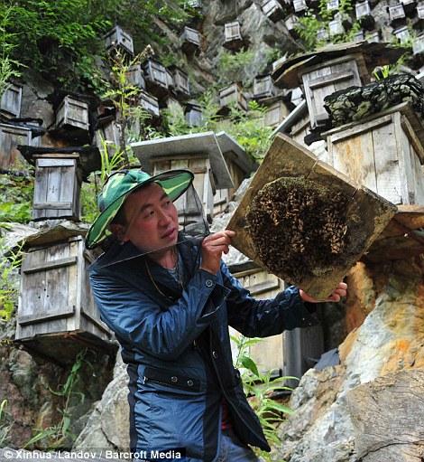 apicultor suspendat