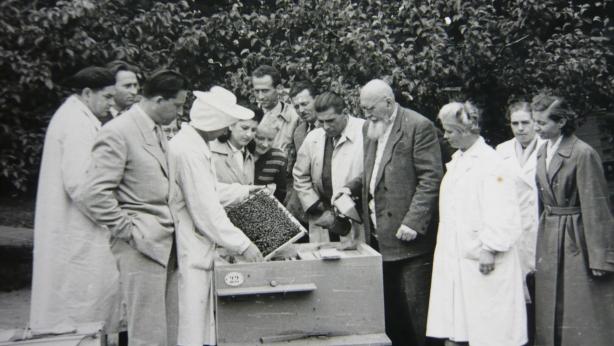 Asociatia Crescatorilor de Albine (ACA)
