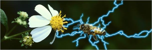 albina electricitate