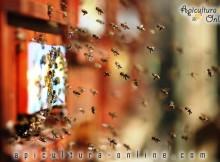 albine la zborul de curatire