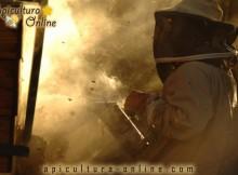 apicultor afumator