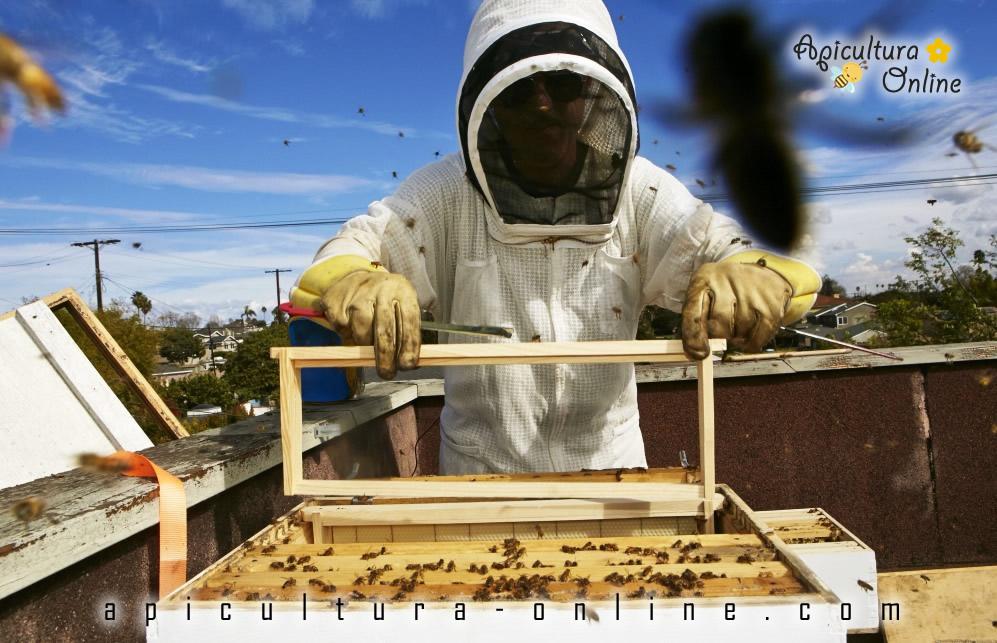stup si apicultor