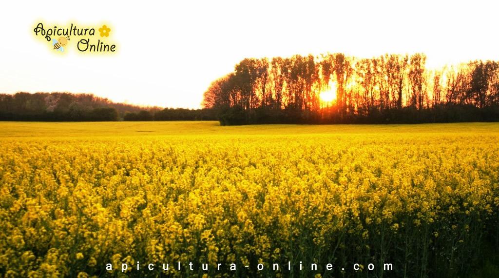 camp rapita - apicultura-online.com