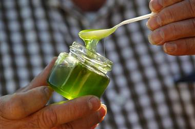 Miere Verde - Apicultura Online
