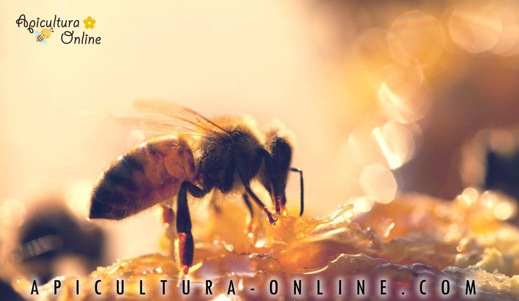 Miere BIO - Apicultura-Online.com